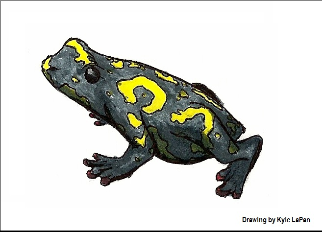Bumblebee Walking Toad drawing by Kyle LaPan