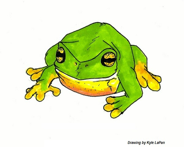 White's Tree Frog drawing by Kyle LaPan